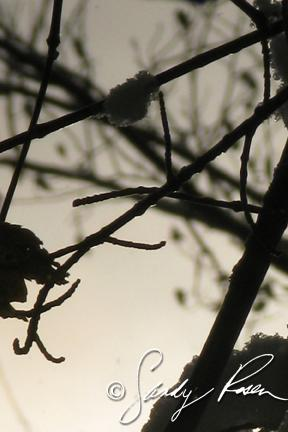 Silhouetted Branches ll